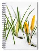 Crocuses In Snow Spiral Notebook