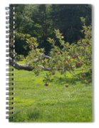 Crooked Apple Tree Spiral Notebook