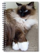 Crossed Paws Spiral Notebook