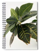 Croton Houseplant Spiral Notebook