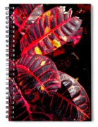 Croton Leaves In Black And Red Spiral Notebook