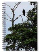 Crow - Black  Bird - Loud Call Spiral Notebook