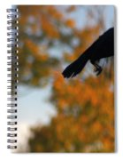 Crow In Flight 3 Spiral Notebook