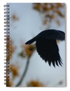 Crow In Flight 4 Spiral Notebook