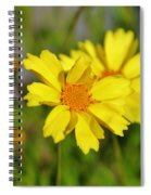 Crown Daisies  Spiral Notebook