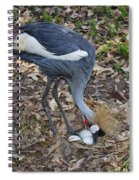 Crowned Crane And Eggs Spiral Notebook