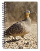 Crowned Sandgrouse Pterocles Coronatus Spiral Notebook