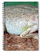 Cuban Tree Frog Osteopilus Spiral Notebook