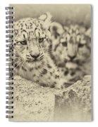 Cubs At Play Spiral Notebook