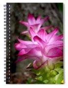 Curcuma Spiral Notebook