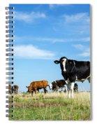 Curious Bull Spiral Notebook