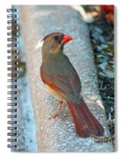 Curious Cardinal Spiral Notebook