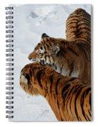 Curious Cats Spiral Notebook
