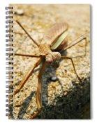 Curious One Spiral Notebook