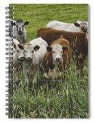Curious Cows Spiral Notebook
