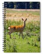 Curious Doe Spiral Notebook