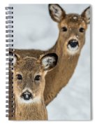 Curious Does Spiral Notebook