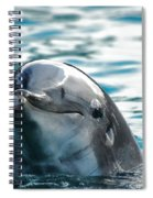 Curious Dolphin Spiral Notebook
