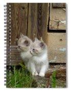 Curious Kittens Spiral Notebook