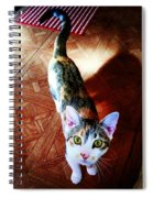 Curious Kitty Spiral Notebook