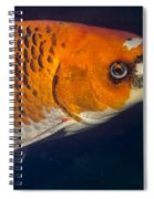 Curious Koi Spiral Notebook