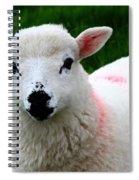 Curious Lamb Spiral Notebook