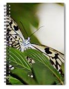 Curious Paper Kite Spiral Notebook