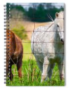 Curious Pony Spiral Notebook