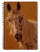 Curious Pony With Spots Spiral Notebook