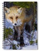 Curious Red Fox Spiral Notebook