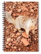 Curious Squirrel 2 Spiral Notebook