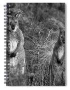 Curious Wallabies Spiral Notebook