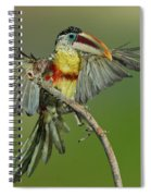 Curl-crested Aracari About To Perch Spiral Notebook