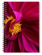 Curley Spiral Notebook