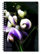 Curlicues Spiral Notebook