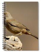Curve-billed Thrasher Toxostoma Spiral Notebook