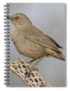 Curved Bill On Cactus Rib Spiral Notebook
