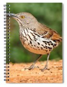 Curvedbill Thrasher With Grub Spiral Notebook
