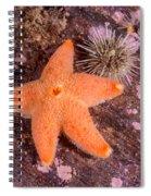Cushion Winged Sea Star Spiral Notebook