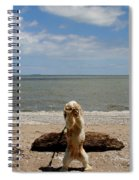 Cute Cocker Spaniel Spiral Notebook
