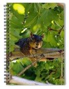 Cute Fuzzy Squirrel In Tree Spiral Notebook