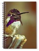 Cute Little Costa's Spiral Notebook