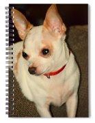 Cute N Sassy Spiral Notebook