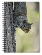 Cute Squirrel  Dare Me Spiral Notebook