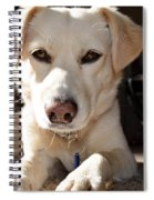 Cute White Dog Spiral Notebook