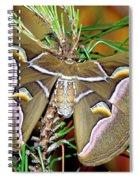 Cynthia Moth Spiral Notebook