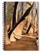 Cypress Hallway Spiral Notebook