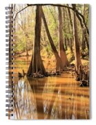 Cypress In The Swamp Spiral Notebook