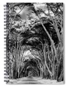 Cypress Tree Tunnel Point Reyes Spiral Notebook