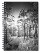 Cypress Trees In Big Cypress Spiral Notebook